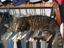 Animals are so funny!: Cats, Animals, Funny Cat, Pets, Closet, Place, Kitty