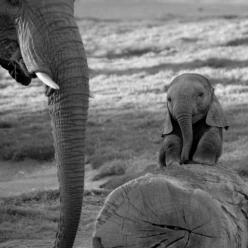baby elephants are seriously one of the cutest baby animals ever.: Elephants Hugging, Precious Things, ️Elephants ️, Baby Elephants, Elephants Photos, Adorable Babies, Awwwww Way, Adorable Things, Elephants 3