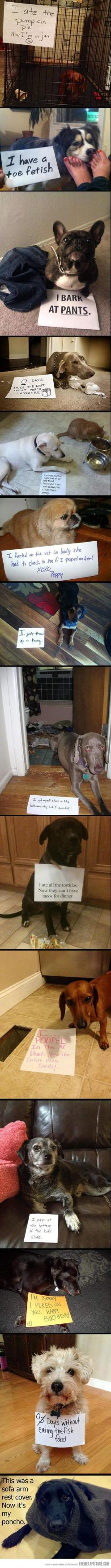 Best of Dog Shaming…it's so funny how sad the dogs look in the pictures: Doggie, Dog Shame, Giggle, Dog Shaming, Puppy, Animal Shaming, So Funny