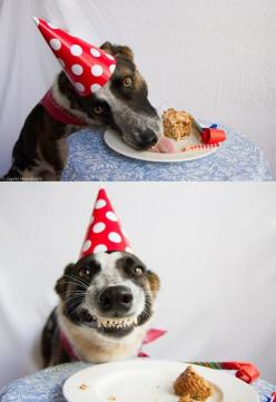 Birthday fun! Dog joy!: Birthday Boys, Pet, Happy Birthday Dog, Dog Birthday, Happy Dogs, Smile, Birthday Cake, Animal