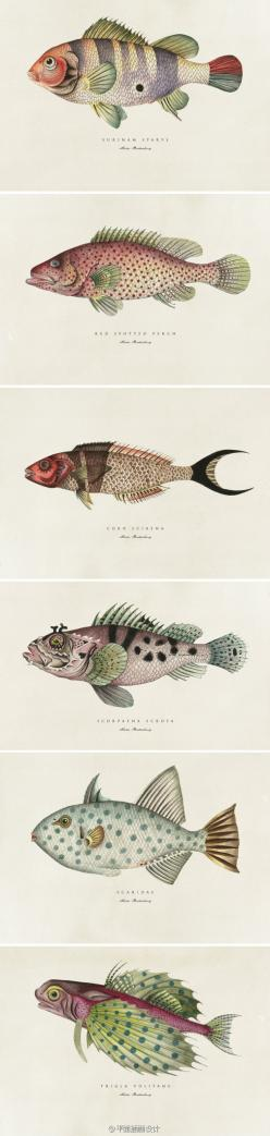 Botanical fish prints by Soil Design, Cape Town, South Africa. Contemporary: Fish Illustration, Fish Art, Fish Prints, Botanical Fish, Botanical Illustration Fish, Soil Design, Fish Vintage Illustration, Cape Town