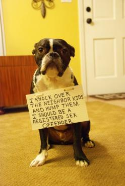 Dog Shaming: I knock over the neighbors kids...: Animals, Dog Shaming, Bad Dog, Pet, Funny Stuff