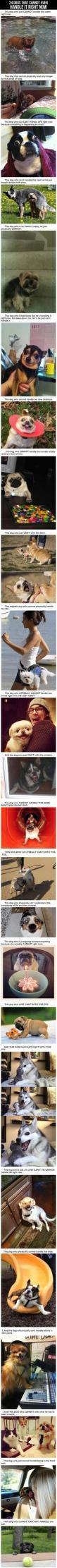 Dogs who just cannot even handle it right now.: Giggle, Laughing So Hard, Cant Handle, So Funny, Animal