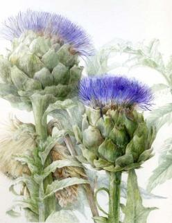 Elaine Searle / Artichoke: Watercolor, Botanical Illustrations, Elaine Searle, Botanical Art, Flowers, Painting