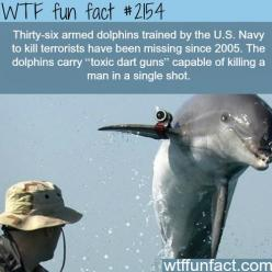 Facts about animals, intersting animals information WTF Facts : funny, interesting  weird facts: Wtf Facts, Wtf Fun Facts, Weird Facts, Navy Dolphins, War Heroes, Killer Dolphins, Weird Fun Facts, Funfacts, Random Facts