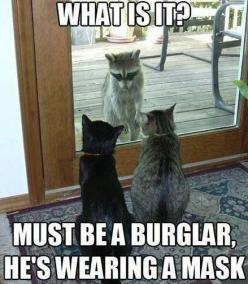 funny animals with captions | 30 Funny animal captions - part 11, funny meme pictures, funny memes ...: Funny Animals, Cats, Funny Cat, Funnyanimal, Burglar, Funny Stuff, Humor, Funnies
