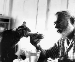 Hemingway and cat-My husband and I went to Key West, FL for our honeymoon and went through Hemingway's house and there were still 6-toed cats that were kittens from cats that were alive when Hemingway was alive!  They were so sweet!!: Cats, Hemingway
