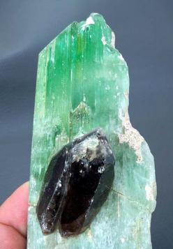 Hiddenite var Kunzite Crystal Mineral Specimen , with Smoky Quartz , Afghanistan: Crystals Gemstones Fossils, Crystalsgems Mineralsrockme, Gems Minerals Crystals Rocks, Minerals Crystals Gems, Gemstones Crystals, Crystals And Gemstones, Gems Minerals Rock