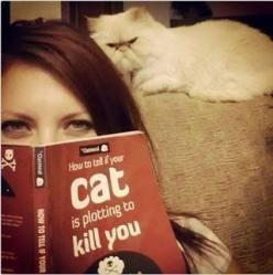 """his face!  (=^.^=) Thanks, Pinterest Pinners, for stopping by, viewing, re-pinning, & following my boards.  Have a beautiful day! ❁❁❁ and """"Feel free to share on Pinterest""""✮✮"""" #catsandme #cats: Cats, Animals, Book, Funny Stuff, Humor, Funnies, Cat"""