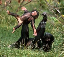 How engagingly human does this chimp baby look :): Animal Pics, Babies, Animals, Monkeys, Mother, Beautiful, Creatures, Funny Animal, Primates