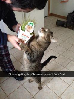 I'm pinning this mainly because I find it hilarious and creepy that someone else has a cat named Skeeter that looks freaking just like mine!!!: Christmas Presents, Funny Cat, Cat Name, Crazy Cat, Christmas Cat, Happy Cat, Animal, Cat Lady