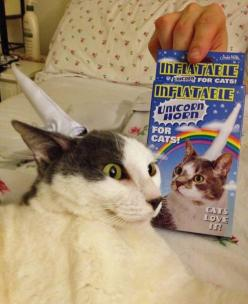 """I do not believe the expression on this cat's face says """"OMG, I LOVE IT!"""". Nope. That expression, to me, reads 'premeditated homicidal revenge in the works'. Kinda think this qualifies as a marketing fail; but regardless, I will confes"""