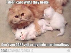 I don't care what they broke, don't you DARE yell at my little marshmallows!: Cats, Kitten, Animals, Stuff, Funny Animal, Kitty, Marshmallows