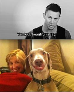 I laughed so hard at this...: Beautiful Today, Giggle, Dogs, Channing Tatum, Funny Stuff, Smile, Animal