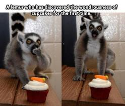 I laughed so so hard at this!!: Funny Animals, First Time, Cupcakes, Funny Pictures, Funny Stuff, Humor, Things, Lemur