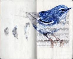 .I love birds, and bird prints on the wall almost as much a flower botanical prints.: Craft, Stuff, Bluebirds Love, Sketchbook, Bluebirds Fly