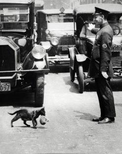 It was a sunny summer afternoon, July 29, 1925. Harry Warnecke, a photographer for the New York News, got a phone tip that a cat trying to carry its kittens home was tying up traffic because a police man had stopped the cars on a busy street (Centre Stree