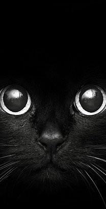 jeepers, creepers where'd ya get those weepers? creepshow, peep show, where did ya get those eyes?: Black Cat Art, Beautiful Cats, Animal Faces, Animal Eye, Black And White Animals, Black And White Faces, All Black Animals, Black Cat Face, Black And W