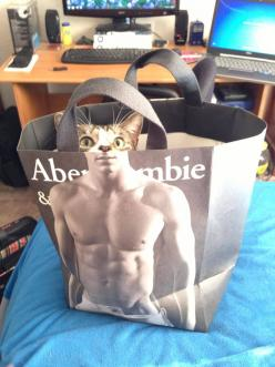 Laughing: Cats, Animals, Funny Cat, Bag, Funny Stuff, Humor, Funny Animal