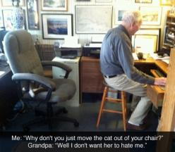 Move the cat // funny pictures - funny photos - funny images - funny pics - funny quotes - #lol #humor #funnypictures: Cats, Chair, Animals, Hate, Funny Pictures, Don T