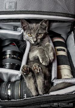 """My mother was full of fascinating superstitions and turns of phrase.  When a cat sat with his/her back to you and raised its tail (I'm trying to be polite about this), she said the cat was """"taking your picture.""""  That explains why this kitten"""