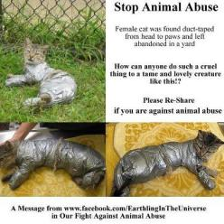 Oh my god this is too cruel :'(: Kitten, Cat, Animal Rights, Animal Cruelty, Sad Animal, Guys, So Sad, Psychopath