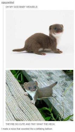 "Oh your fine......besides i'm finishing my glamour shots.    ""ohhhh man I'm going to fall to my death. Someone quick get a priest. I did steal the cookies....eeeeee"": Babies, Baby Weasels, God, Baby Otters, Aww Baby, D Awwww, I Made Dis Ot"