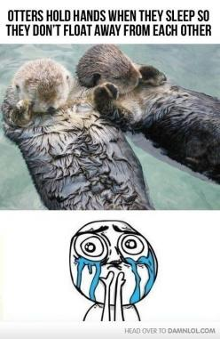 otters hold hands when sleeping (I seriously hope this is a true fact, how adorable!): Otters Holding Hands, Hold Hands, Animals, Sweet, Stuff, The Face, Funny