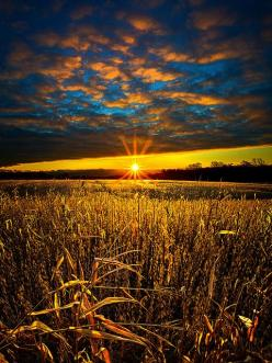 : Phone Wallpapers, Nature, Color, Beautiful Sunset, Sunrise Sunsets, Wheat Fields, Sunrises Sunsets