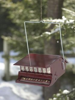 Red Squirrel-Proof Birdfeeder: Lg Birds, Birds Wild, Bird Feeders, Red Squirrel Proof, Squirrels Larger Birds, Larger Birds Squirrels, Squirrel Proof Birdfeeder