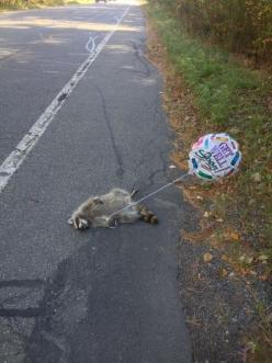 Sad...but still hilarious: Giggle, Funny Stuff, Get Well Soon, Humor, So Funny, Animal