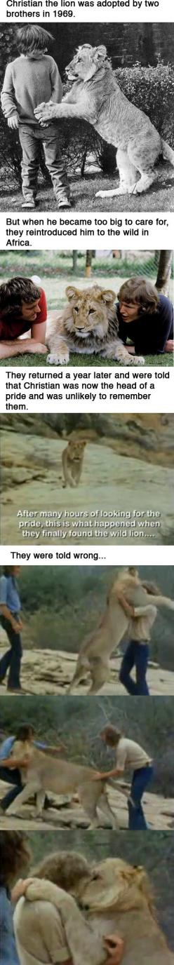 Seriously, things like this make me cry. This is amazing :) animals do have a heart and a soul: Animal Quote, Animals, Cute Lion, Funny Happy Animal, Animal Saying, Quotes Animal