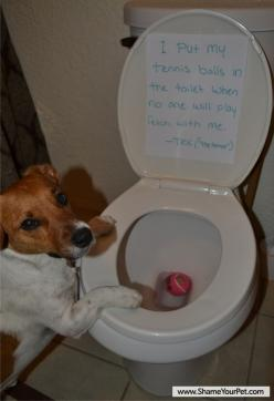 Shame Your Pet | Dog Shaming • Cat Shaming | Shame Your Pet: Jack Russells, Funny Animals, Funny Things, Funny Dogs, Funny Dog Videos, Petstuff Dog Shaming, Funny Stuff, Dog Joke