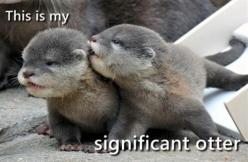 Significant otter.: Babies, Animals, Cuteness, Baby Otters, So Cute, Funny, Adorable, Things, Babyotters