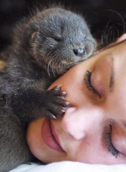 significant otter…: Babies, Face, Animals, Sweet, Baby Otters, Pet, Adorable, Otter Hug