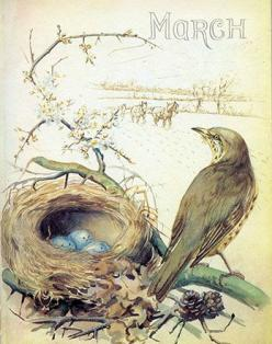 Song Thrush and nest, March (1906) - from Edith Holden's Phenology of the English Midlands by Month, 1905-1906.: Ideas, Edith Holden, Vintage, Art, Month, Birds, Spring