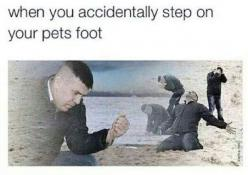 """then im just like """"OH MY GOSH ARE YOU OK?!?!?! IM SO SORRY!!!!!!!!!!!!!!!!!!!!!!"""" and they r running away from me then im just like """"  :'(   my poor baby!!! come back! i didnt mean it!!!!!!!"""": Accidentally Step, Pet S Foot, Truth, Pets"""