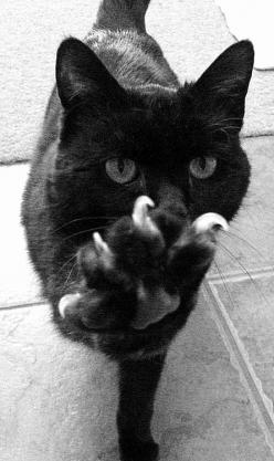 These claws are made for scratching . . . and that's just what they'll do . . . one of these days these claws will scratch all over you . . . Sing it Nancy Sinatracat: Animals, Kitty Cat, Meow, Black Cats, Posts, Claw, Blackcat, Cat Lady