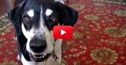 This Conversation Between A Dog And His Owner Is Hilarious — And So Accurate! You Have To See it. | The Animal Rescue Site Blog: Animal Rescue, Dog Owners, Site Blog, Pet Owner, Conversation, Dogs Don T, Animal Video, English