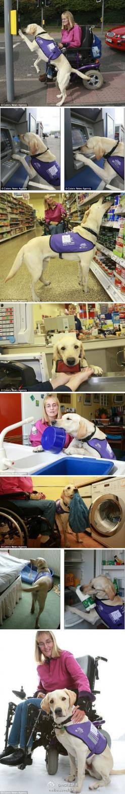 This dog rocks!: Animals, Awesome Dog, Amazing Dogs, Pet, Service Dogs, Friend