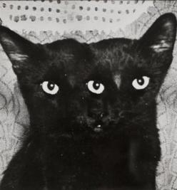 This is just a really cool photo.  I love two headed animals, even though this is photoshop, the effect is freaky and awesome: Photos, Animals, Meow, 1940S, Black Cats, Arthur Fellig, Photography, Three Eyed Cat, Weegee