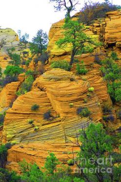 ✯ Weathered Rock Formations - East Zion, Utah: Formations Zion, Zion National Park, Rock Formations, East Zion, National Parks, National Park Utah, Rocks Minerals Formations, ภเГคК ค๓