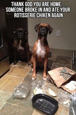 Well, I'm just glad you're both okay: Thank God, Animals, Dogs, Boxer, Funny Stuff, Humor, Funny Animal