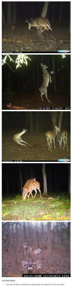 What even are deer: Animal Pun, Trail Camera, Animals, Giggle, Funny Deer Pictures, Cam Deer, Funny Hunting Pictures, Deer Camera Pictures