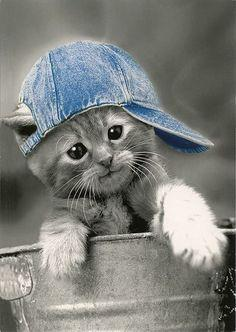 What up I'm a little kitten Just chillin: Cats, Hats, Animals, Pets, Kitty Kitty, Kittens, Things, Kitties