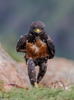 Wild animal guide and photos //www.HolmanRV.com/?adsource=pinterest ]: Like A Boss, Animals, Eagles, Birds, Photo, Walk