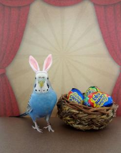24 Hours O' Cute: Hoppy Easter @ 10:45pm PT (BONUS!). #birds #Easter #parakeets: Animals, Easter Budgie, Cadbury Bunny, Funny, Budgies Parakeet, Bunnies, I D