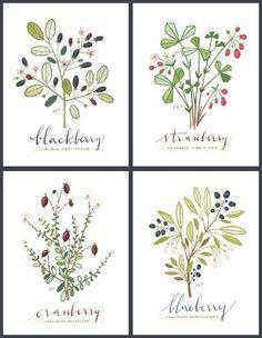 4 BERRIES SET Culinary Art Collection by evajuliet on Etsy, Maybe 2 of the berry ones with 2 black herb ones from her for the dining room?: Dining Rooms, Fruit, Idea, Culinary Arts, Art Collection, Berries Set, Flower