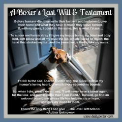 A Boxer's Last Will & Testament! #boxer #boxerdog www.dailyboxer.com http://on.fb.me/1rRbXVS: Boxer Dogs, Animals Pets, Boxerdogs, Boxerdog Www Dailyboxer Com, Boxer Stuff, Adorable Sweet Boxers And, Boxerdog Boxerlove, Boxers Animals, Boxer Boxer