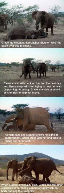 Aww: Amazing Elephants, 14 Pictures, Beautiful Animals, Elephant S Vigil, Powerful Story, Prove Animals, Snake Bites, Amazing Animals, Friend